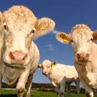 is vlees eten spiritueel?
